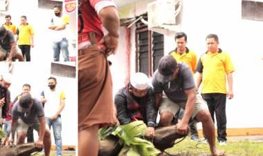 Demi Meneladani Sifat Dan Perilaku Nabi Dihari Raya Idul Adha, Bawaslu Kabupaten Gorontalo Sembelih 2 Ekor Sapi