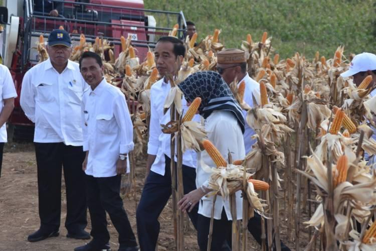Bupati Nelson Pomalingo Dampingi Presiden Jokowi Panen Raya