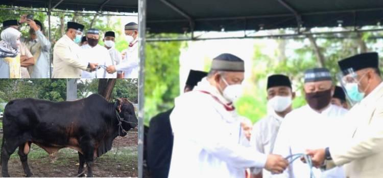 """""""1,35 Ton"""" Sapi Kurban Presiden Jokowi Diserahkan Gubernur Gorontalo"""